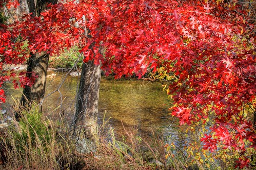 Red Oak by the River