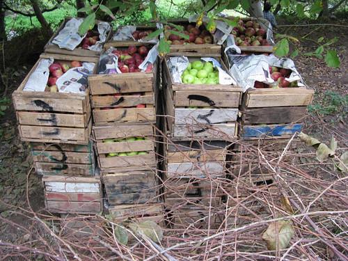 Toubkal trek - apple-growing country