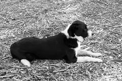 Dog Training...