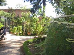 Orto botanico (Urbino)
