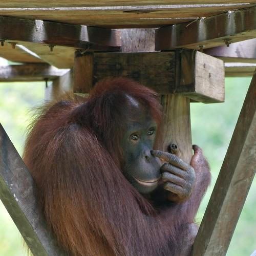 me monkey... you animal