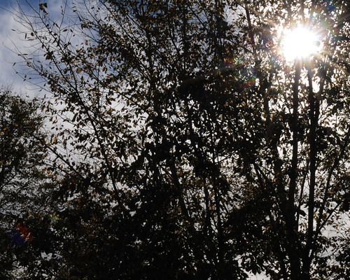 Sunshine -- 30 days of Gratitude: Day 4