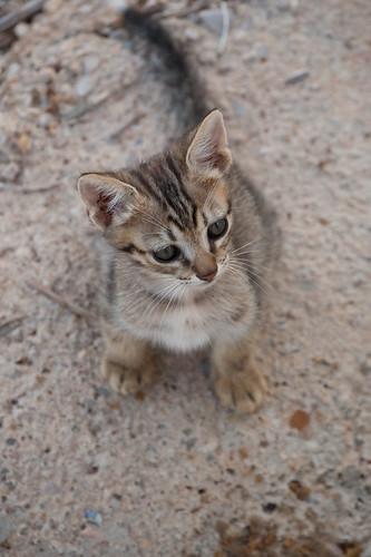 Mini gato