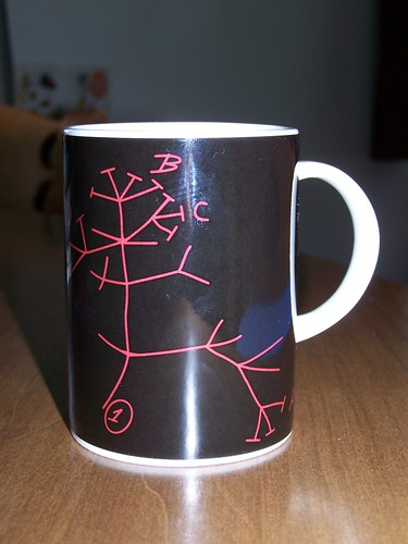 Darwin Mug from Natural History Museum, London