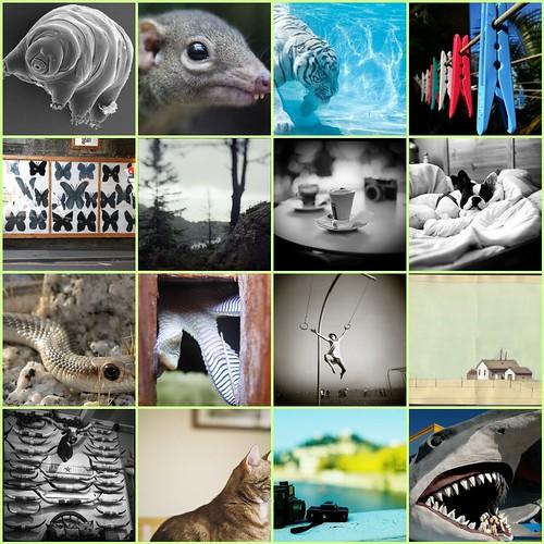 Flickr favorites 8/21/2009