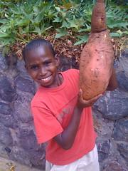 Muhamud and the giant sweet potato