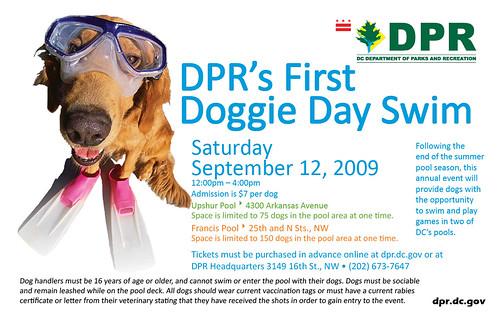 Doggie Day Swim 2009