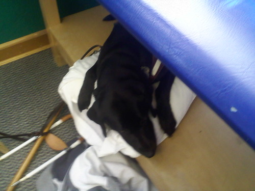This is Faye comfy at my physio appt.  picture is low quality due to it was taken with my old cell phone