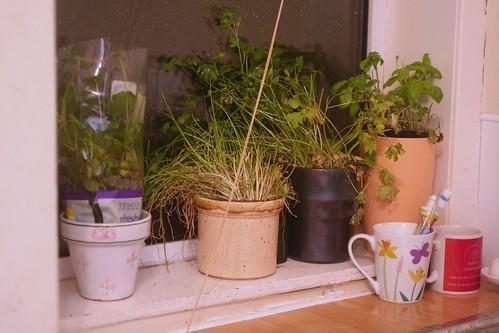 herb garden
