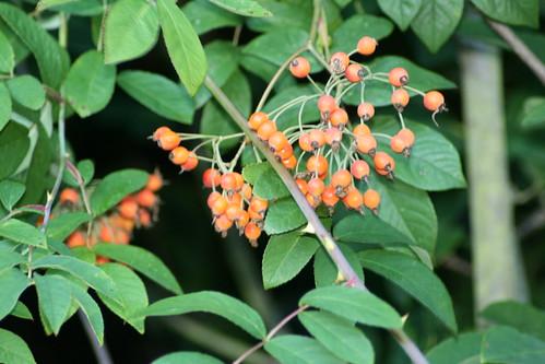 20090919 Edinburgh 20 Royal Botanic Garden 533