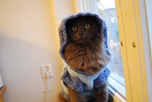 The Cat Hoodie