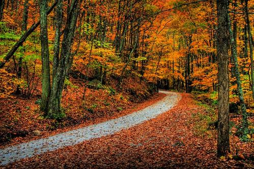 Through the Autumn Wood