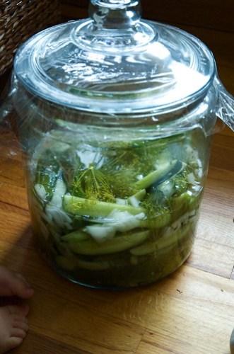 Sun Pickles!