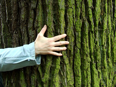 hugging an English oak, Hampstead Heath