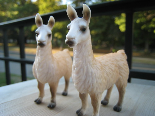 llamas before