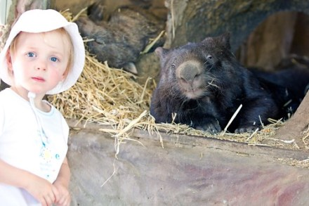 Charlotte Meets A Wombat
