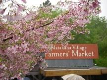Matakana - market and wine - 4