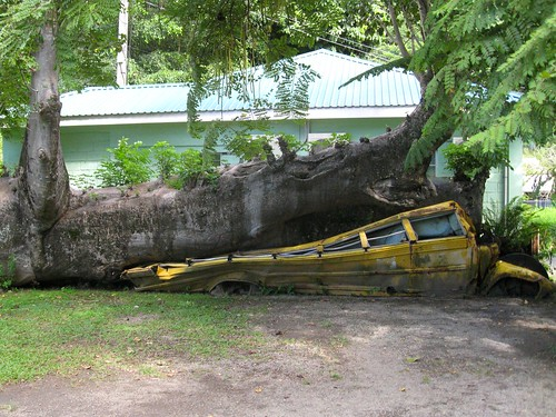 school bus crushed by a tree