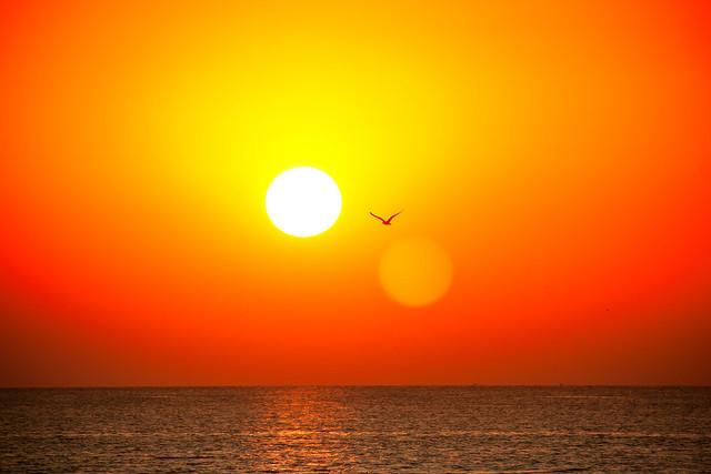 Gaviota ante el sol...