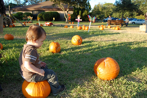 pumpkin_sit
