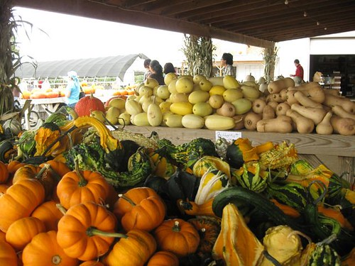 Homestead Farms - More Squash