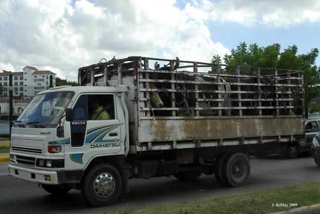 Cattle Truck - Santo Domingo, Dominican Republic