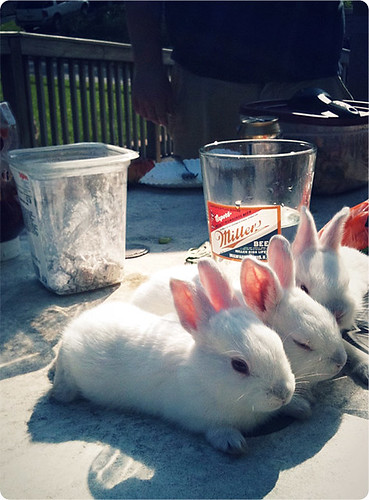Tired bunnies are tired