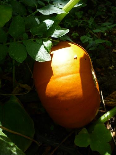 Pumpkin by you.
