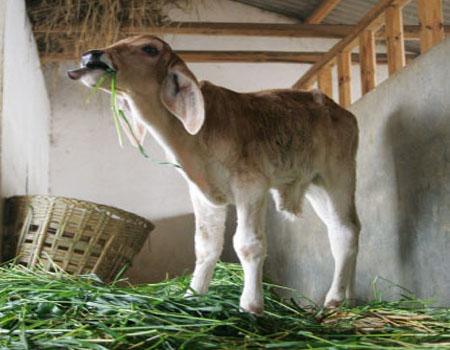 Baoshan Community Dairy Feeding Centre