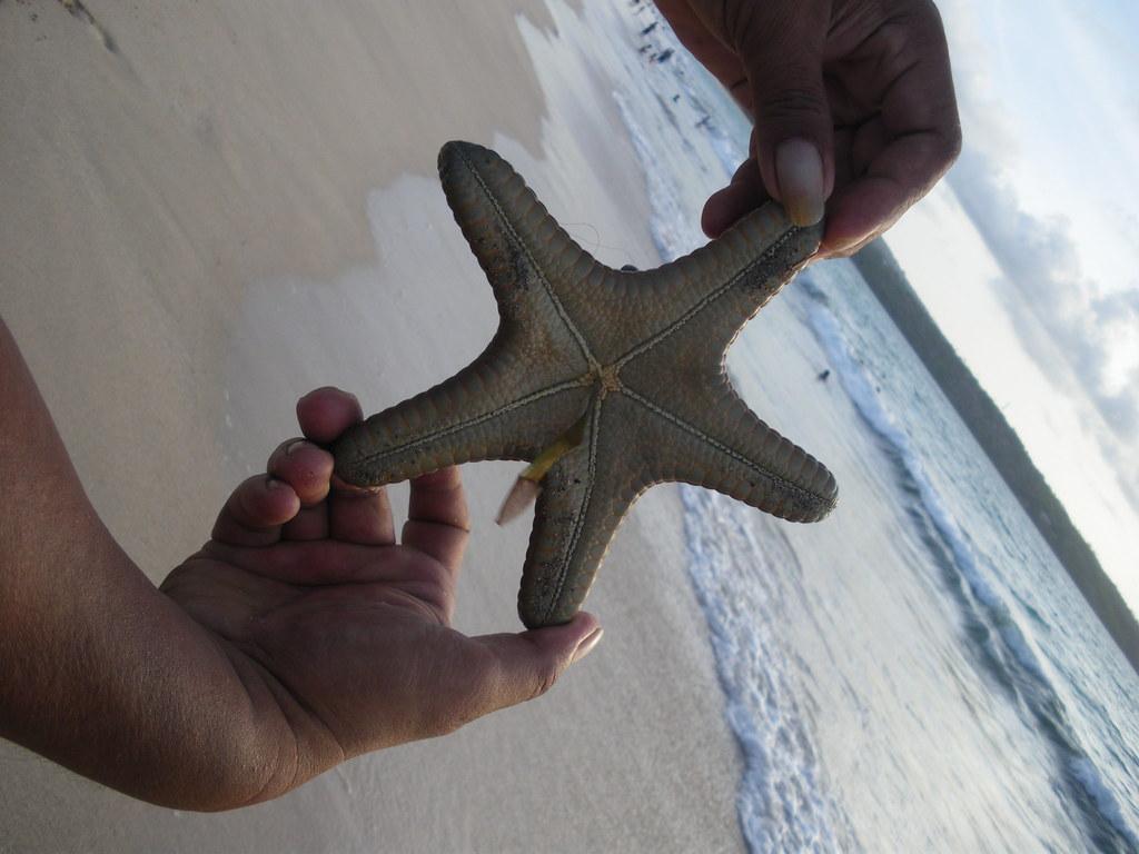 Starfish- IMGP3163