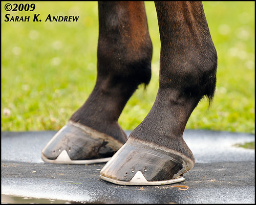 Wizard's front hooves