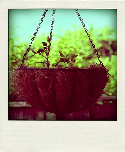 Hanging basket Poladriod
