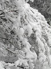 Snow Day 02-12-10
