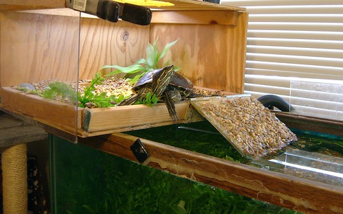 wide angle pet turtle picture
