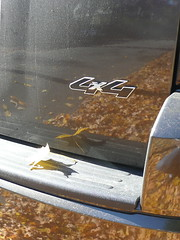 4x4 bumper with reflected leaves