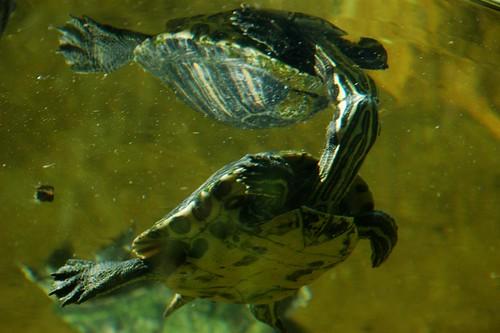 Schildkröte im Zoo d'Amnéville