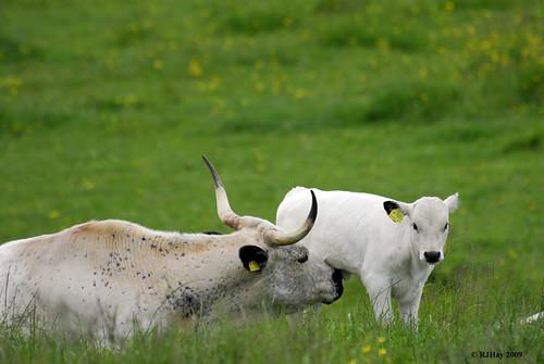 Livestock We Met Along The Path