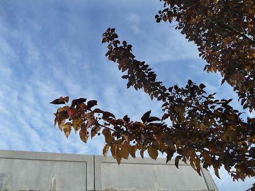 Branch & sky