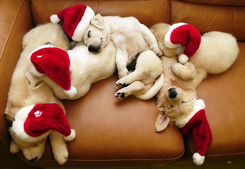 sleeping santa dogs