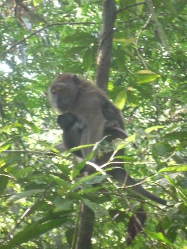 Affenmutter mit Baby