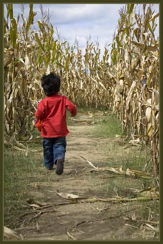 Struttin thru the Maize