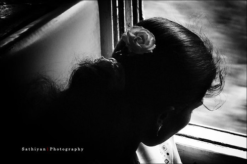 Rose (by எஸ்.சத்த� ��யன் | Sathiyan)