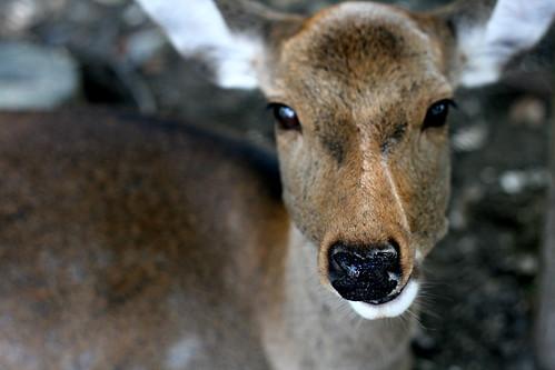 Monday: Macro Deer
