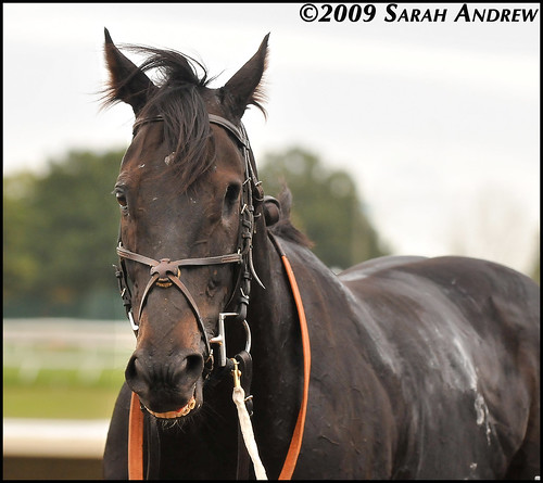 Dirge, a one-eyed racehorse