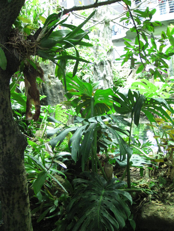Tropical Rainforest Abiotic Factors Of The Tropical