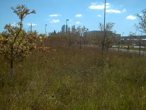 Ford Factory & Wetland at Rouge