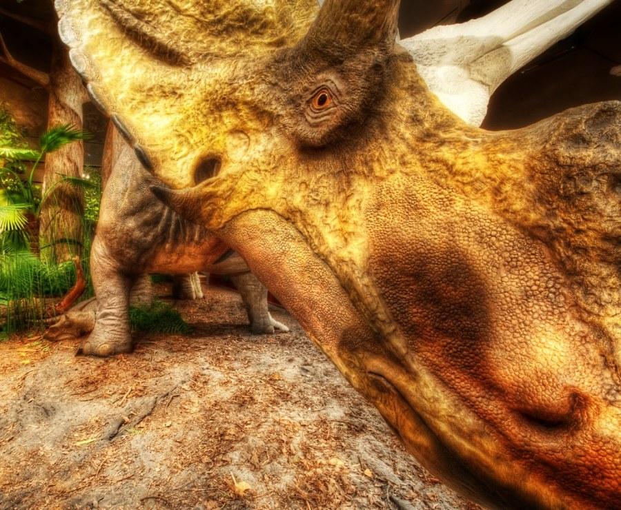 Triceratops Attack