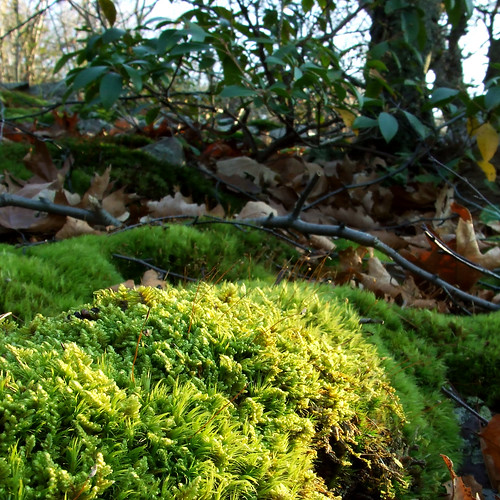 moss and laurel
