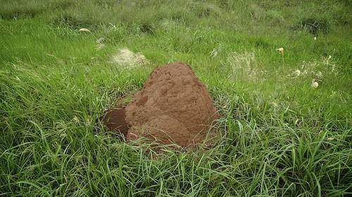 Мравињак (аутор Corey Holms)