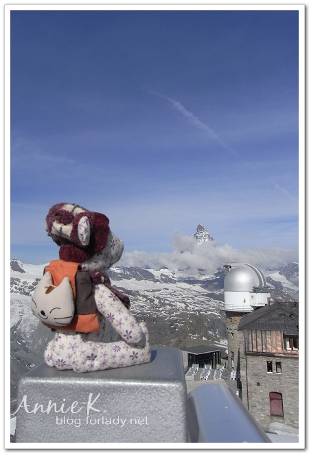 Gornergrat山上小熊